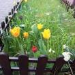 003-wiosna-lato