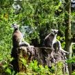 zoo-2015_012