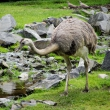zoo-2015_014