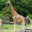 zoo-2015_016