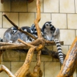 002-zoo20129